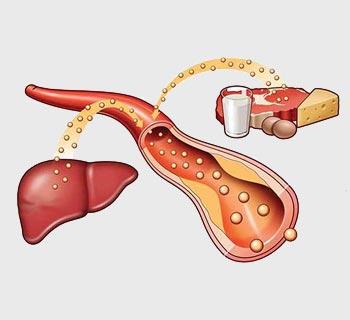Maščobe in holesterol